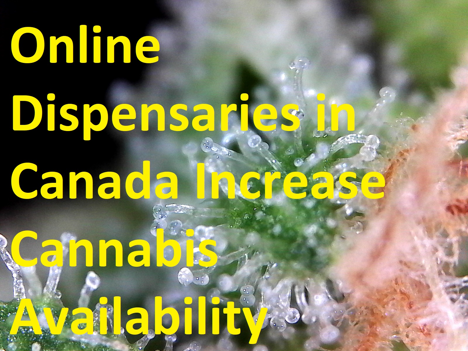 Online dispensaries