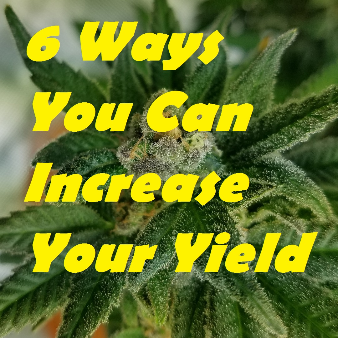 6 Ways You Can Increase Your Yield